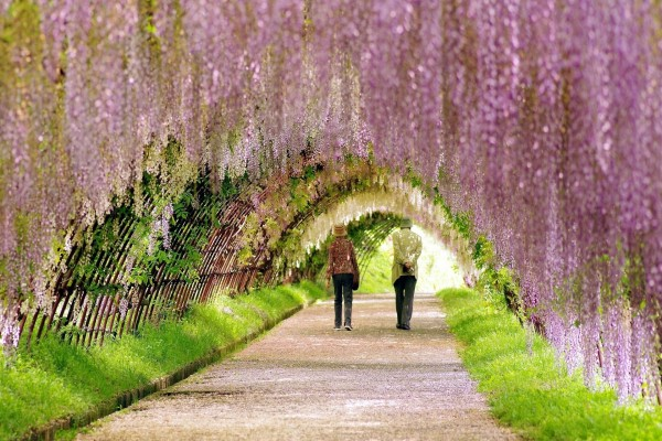 Paseo por el túnel de las flores
