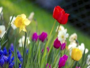 Flores variadas en el jardín