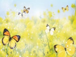 Postal: Mariposas y flores