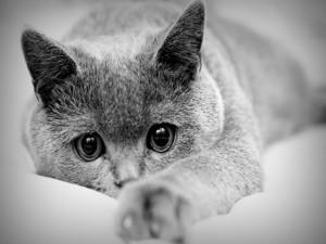 Postal: Un bonito gato con grandes ojos