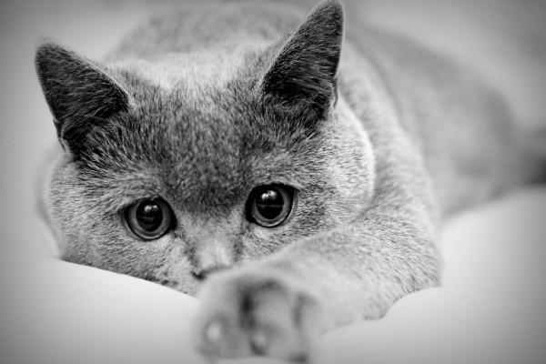 Un bonito gato con grandes ojos