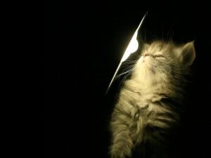 Postal: Gatito junto a la luz