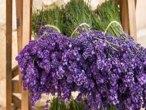 Postal: Ramos de flores de lavanda