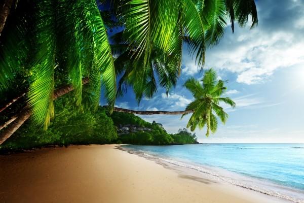 Palmeras y árboles cerca del océano