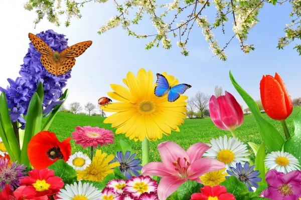 Mariposas entre flores de varios colores