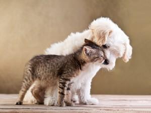 Postal: Dos amigos: un gato y un perro