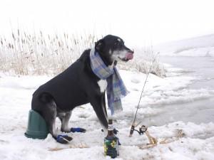 Postal: Perro intentando pescar