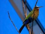 Pájaro con largo pico en las ramas