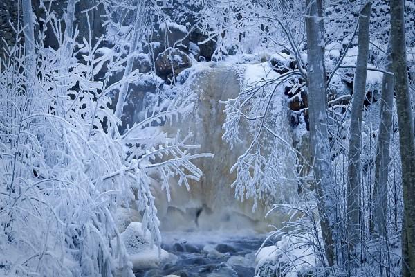 Río y árboles congelados (Suecia)