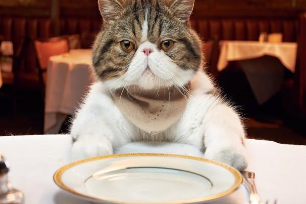 Esperando la comida