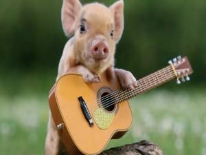 Postal: Un cerdito junto a su guitarra