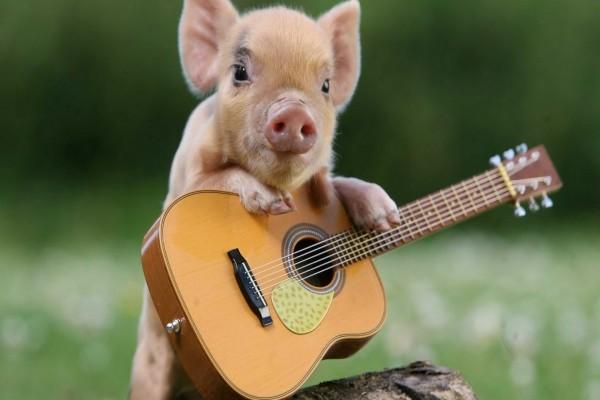 Un cerdito junto a su guitarra