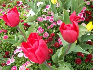 Postal: Tulipanes y flores