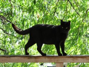 Precioso gato negro sobre la barandilla de madera