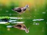 Ave reflejada en el agua
