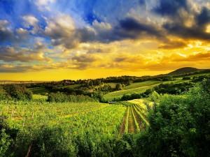 Amanecer en los campos de cultivo