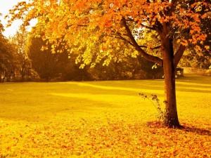 Árbol otoñal recibiendo la luz del sol