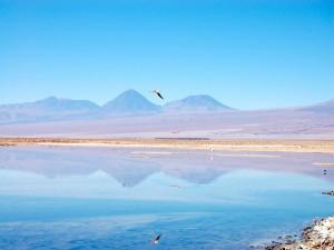 Flamencos volando sobre la laguna