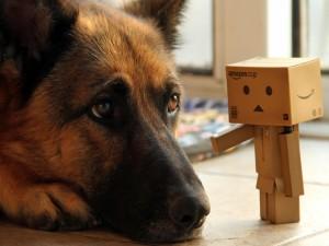 Danbo junto a un perro