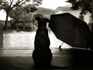Postal: Perro junto a un paraguas