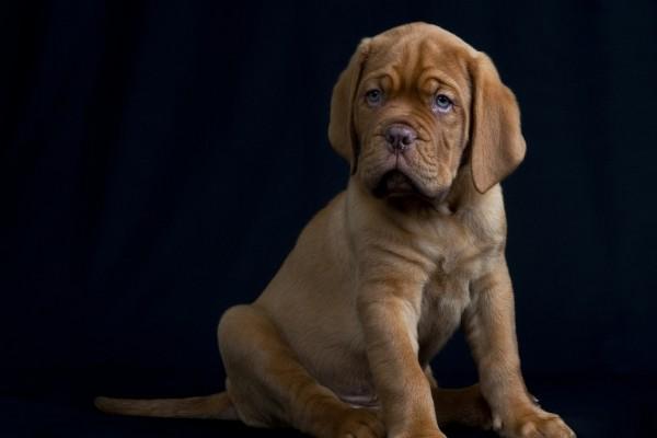 Bonito cachorro de color marrón