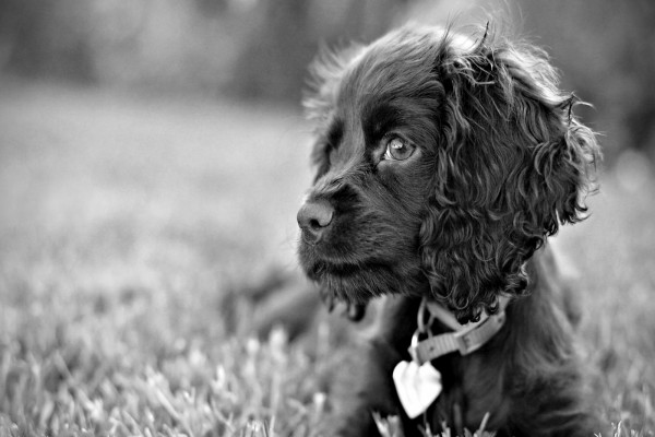 Un pequeño perro negro