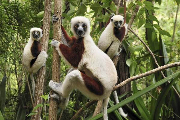 Primates divertidos en los árboles