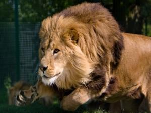 León en movimiento