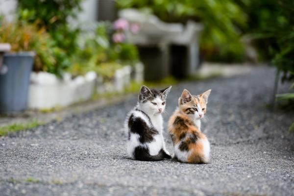 Gatitos mirando atentos