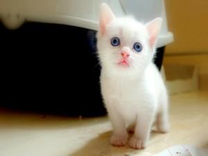 Postal: Un lindo gatito blanco