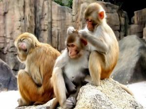 Postal: Monos entretenidos