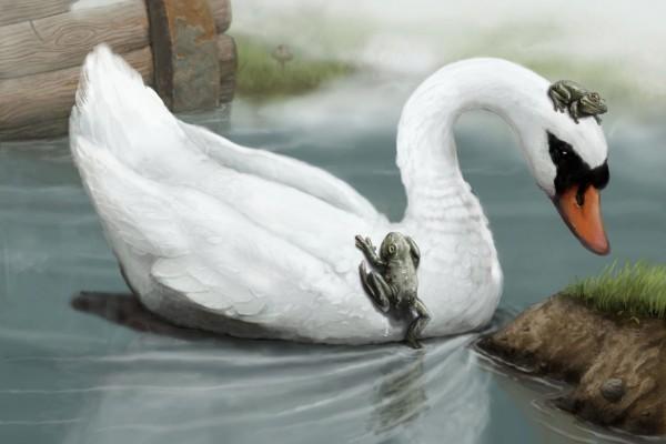 Ranas sobre un cisne blanco