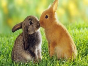 Postal: Pequeños conejos dándose un beso