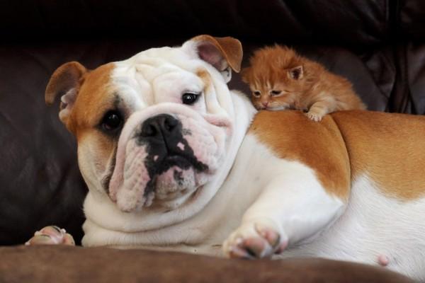 Gato bebé encima de un perro