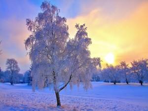 Postal: El sol en un campo nevado