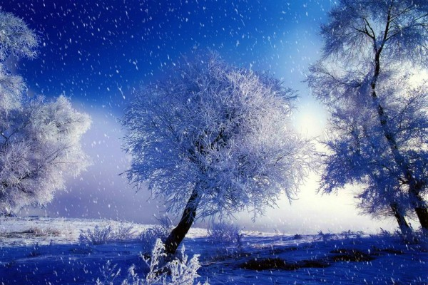 Nieva sobre los árboles