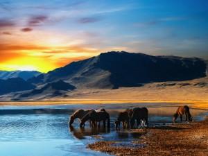 Postal: Caballos tomando agua