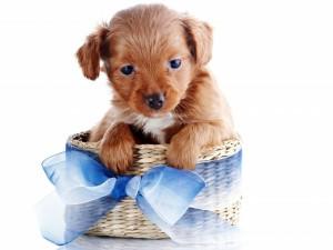 Postal: Un perrito en una cesta con lazo