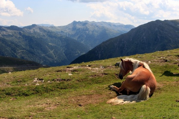 Un caballo sentado en la hierba, cerca de las montañas
