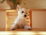 Perro sobre la silla