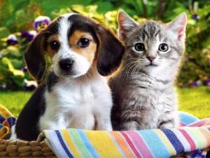 Gatito y perrito en la cesta