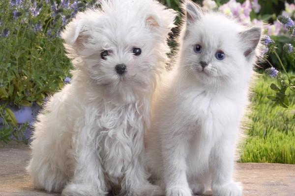 Gatito y perro de color blanco