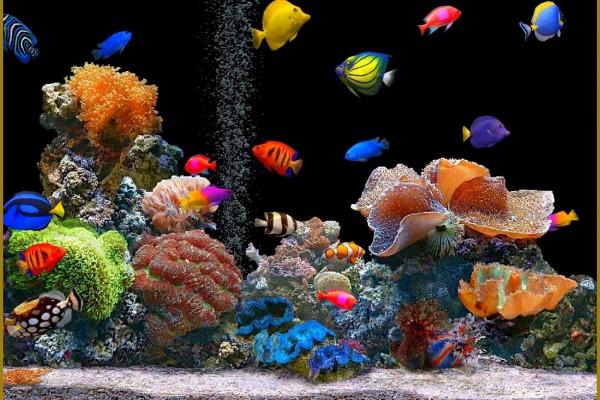 Acuario con bonitos peces de colores