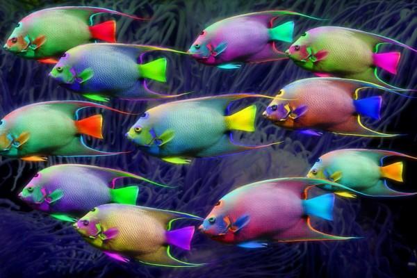 Peces en varios colores