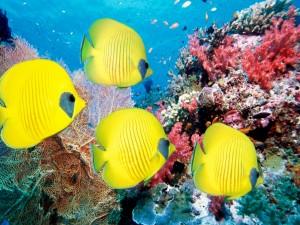 Postal: Peces en movimiento bajo el mar
