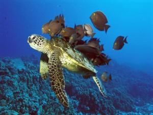 Postal: Grupo de peces junto a la tortuga