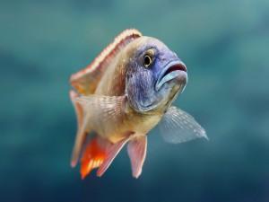 Un pez con distintos colores