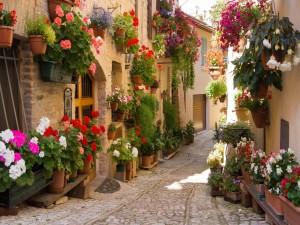 Casas adornadas con flores