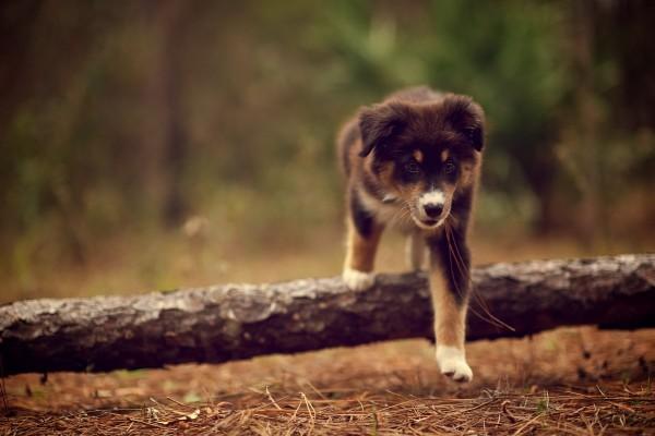 Perro paseando en el bosque