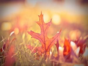Postal: Hojas de otoño a la luz del sol